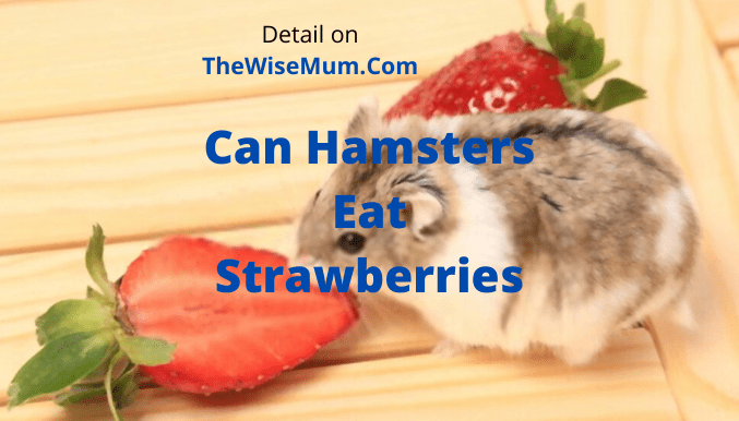 Can Hamsters Eat Strawberries? Are They Healthy and Safe?