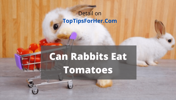 Can Rabbits Eat Tomatoes- Pros and Cons!!