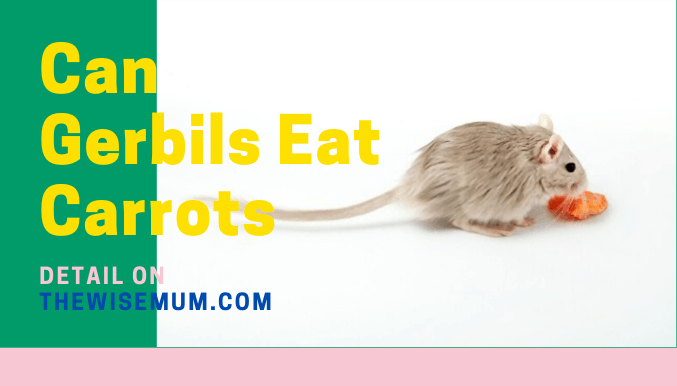 Can Gerbils Eat Carrots? What Part is Safe?