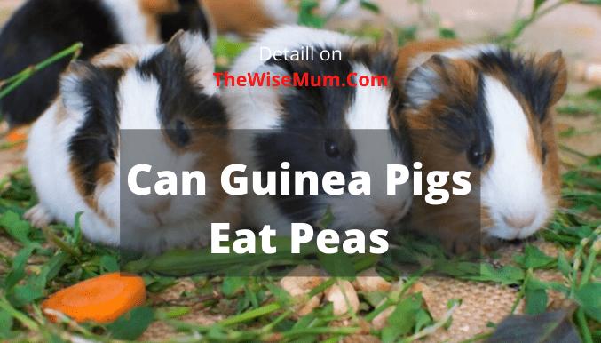 Can Guinea Pigs Eat Peas? Frozen & Fresh?