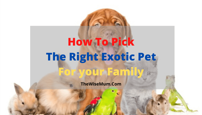 How To Pick The Right Exotic Pet for your Family?