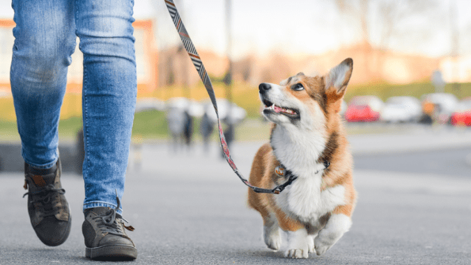 Dog-Walking Gear for Active Dog Owners